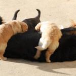 sUNIA_REPAS_1_2012-03-13-tn
