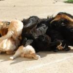 sUNIA_REPAS_2_2012-03-13-tn