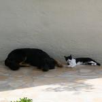 Gladys des Leus Altiers 2012_05_18_-_Sieste_entre_copines_par_une_chaude_journee_5_1-tn
