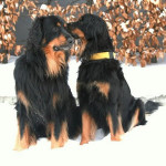 Chester et Sunia bisou