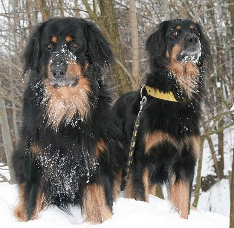 Chester et Sunia neige