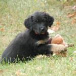 Gilda des Leus Altiers 2011-10-17_1-tn