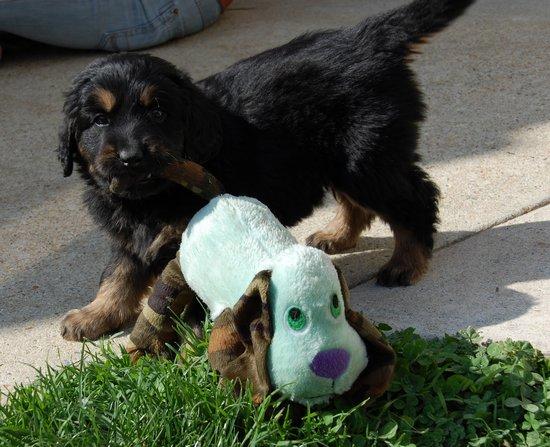 Enc_chien_jouet_2011-03-21THUMB3.