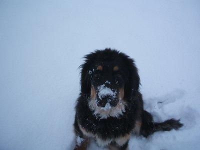 Eva Luna neige
