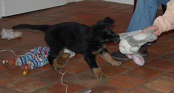 Betsy_2007-01-21_187_thumb