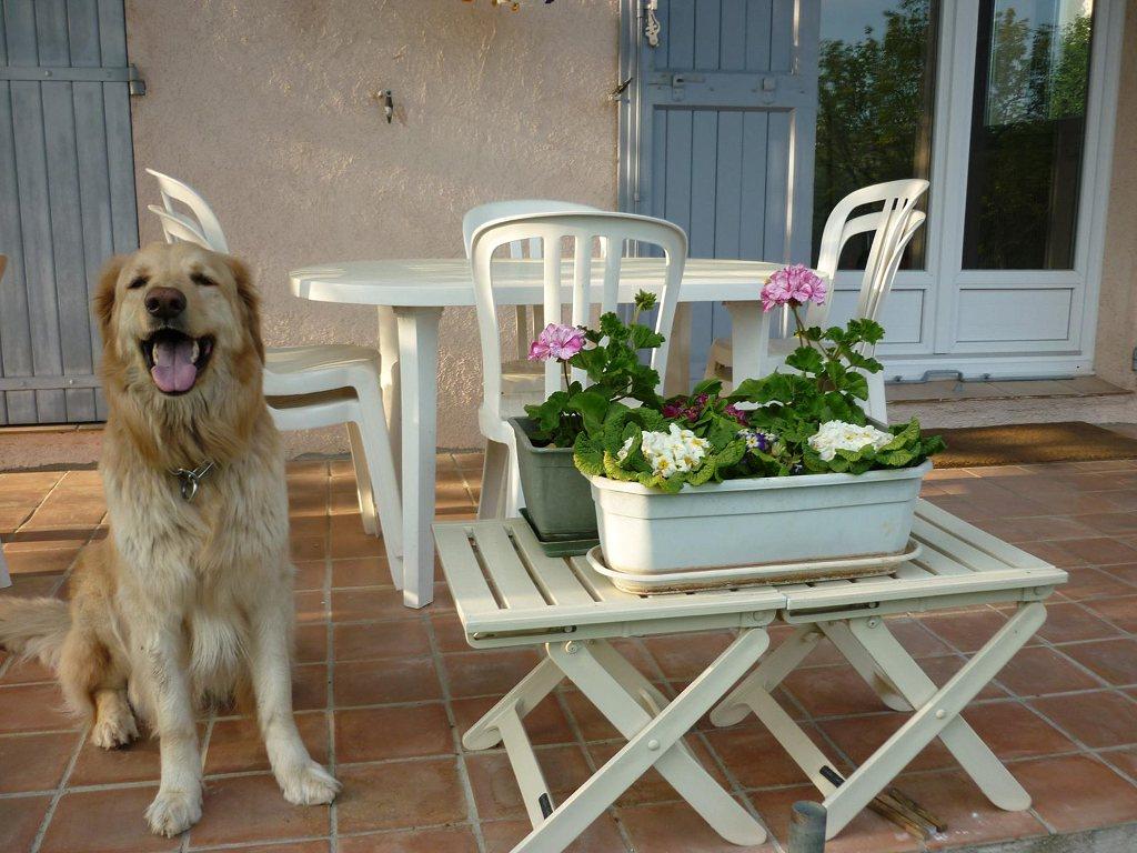 Cayros des Leus Altiers fleurs 2011