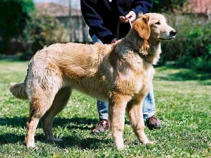 Shakti debout avril 2002