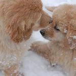 chiots_neige_07_thumb