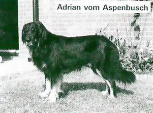 Adrian vom Aspenbusch