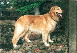 Alex v.d. Gräfenburg