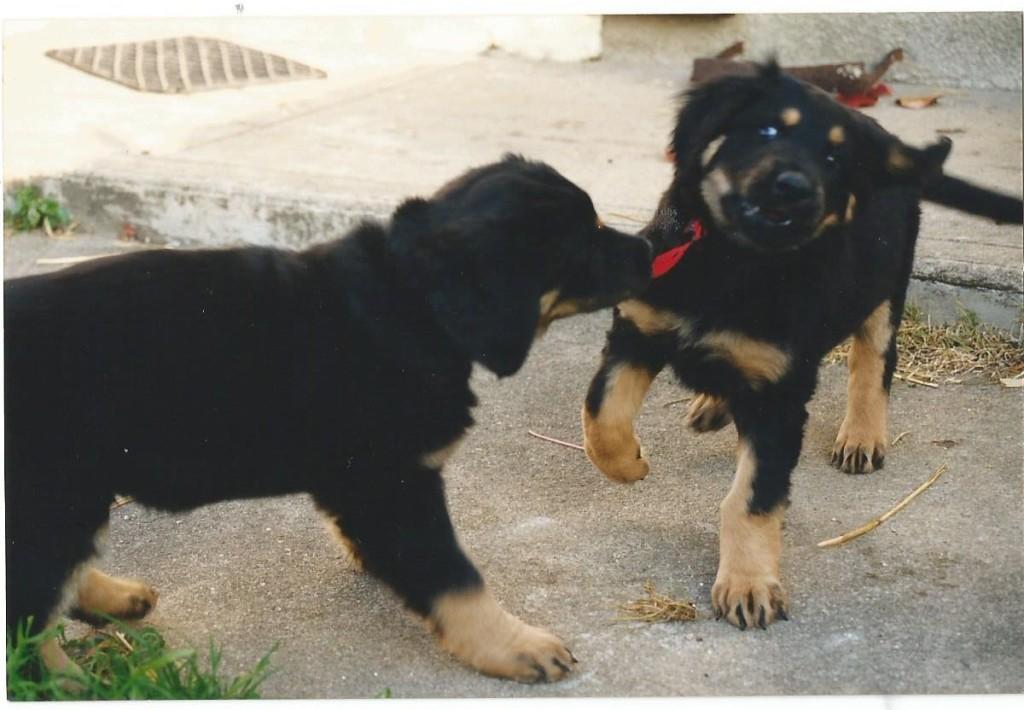 """Phaloune et Pooka : """"Tu me le rends, c'est le mien!"""""""