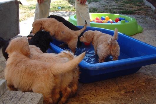 notre toute première baignade, que c'est bon quand il fait chaud!