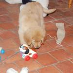 Lupin des Leus Altiers 2015-10-13 2-tn