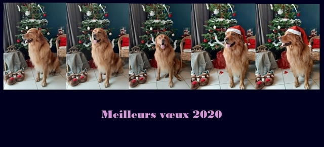 Lipton-Yellow des Leus Altiers noel 2020w(1)