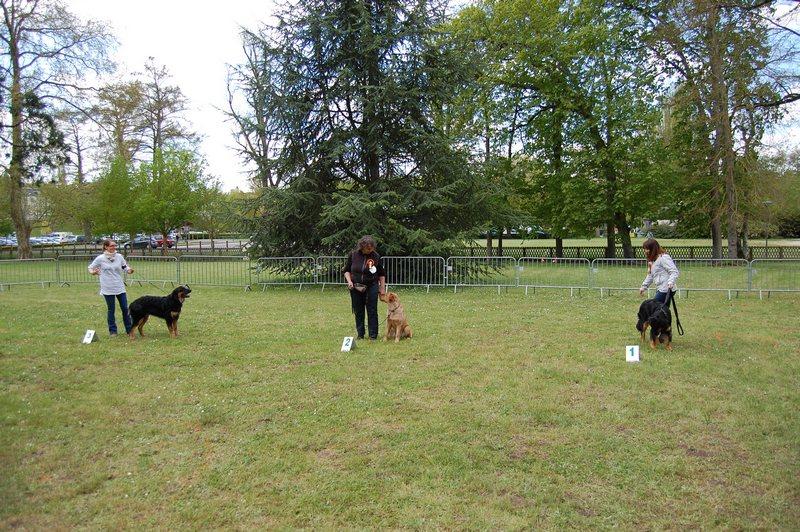 Classe puppy femelles 1_tn