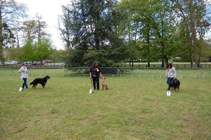 Classe puppy femelles 2_tn
