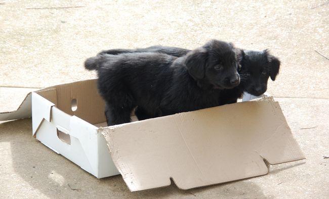 Et pour finir, nous retournons dans notre boîte!
