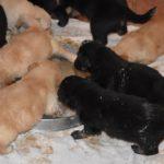 premier-repas-2011-11-09-3_tn