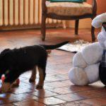 Malou des Leus Altiers 2012-12-05 2