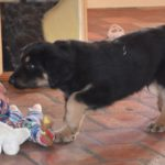 Malou des Leus Altiers 2012-12-05 4