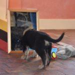 Malou des Leus Altiers 2012-12-05 5