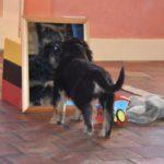 Malou des Leus Altiers 2012-12-05 6