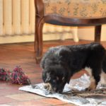 Meïje des Leus Altiers 2012-12-05 12