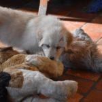 Maia des Leus Altiers 2012-12-05 3