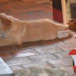 Moona des Leus Altiers 2012-12-05 10