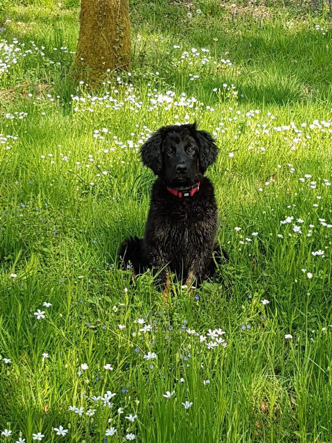 Nessy des Leus Altiers 3 mois 3