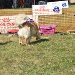 Orval des Leus Altiers TAN 3