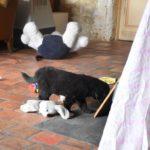 Dos des Leus Altiers 2017-07-02 8_tn