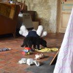 Dos des Leus Altiers 2017-07-02 9_tn