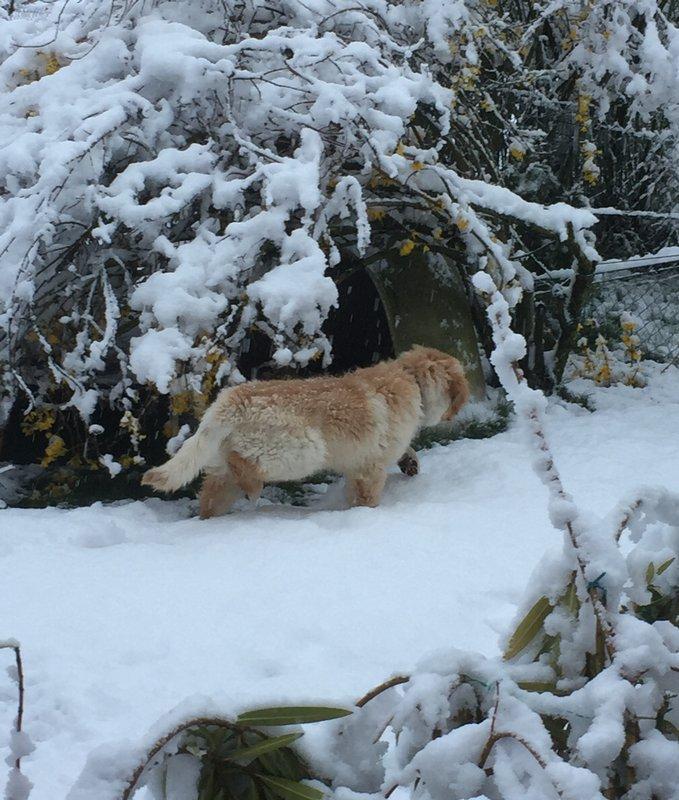 Oslow-O'Brian des Leus Altiers deuxième neige1_tn