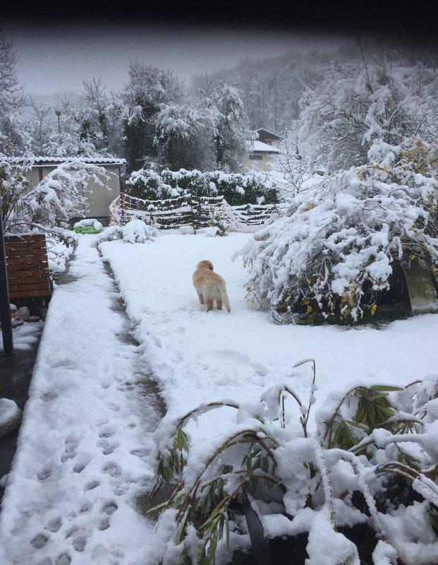 Oslow-O'Brian des Leus Altiers deuxième neige2_tn