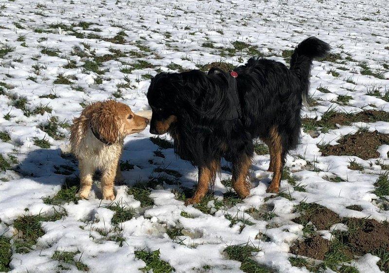 Oslow-O'Brian des Leus Altiers première neige, avec Gibbs 1_tn
