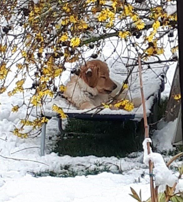 Oslow-O'Brian des Leus Altiers première neige_tn