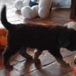QR Pongo des Leus Altiers 2019-07-28 7_tn