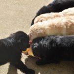 R1 des Leus Altiers canard 2020-02-20 5_tn