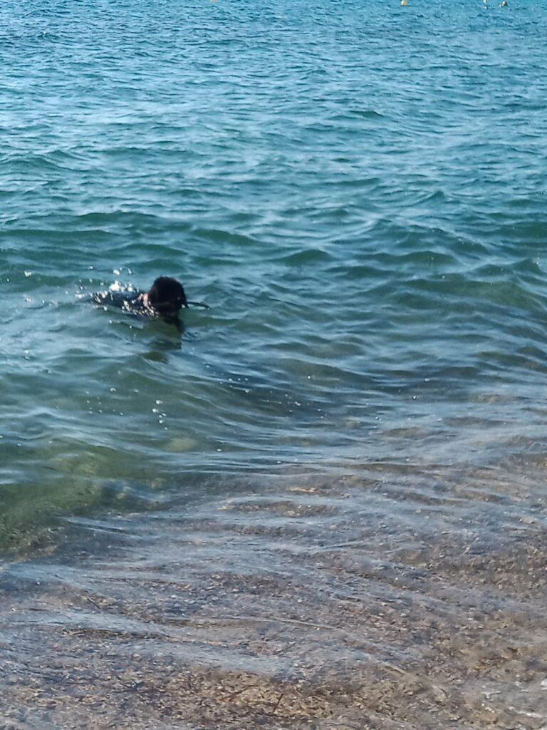 Je profite de nager car il est 7 heures du mat et tous les vacanciers dorment. La plage est quasi vide pour que je m'amuse. Après la nage, repos à l'ombre avec gamelle d'eau fraiche. Puis jeu de ballon sur le sable pas encore chaud. VIVES LES VACANCES ... SUR CES PLAGES AUTORISEES AUX TOUTOUS!