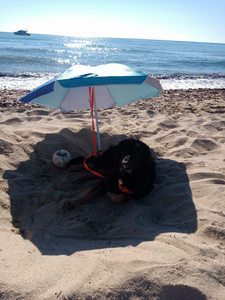 Repos après une belle baignade, en alternance avec le ballon. Ah oui, le parasol n'est que pour moi! Mers maîtresses vont se baigner pendant que je me repose!