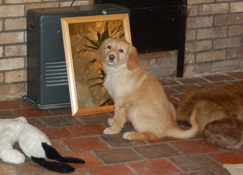 on m'a déposée devant un miroir et j'y ai vu un petit chien ...
