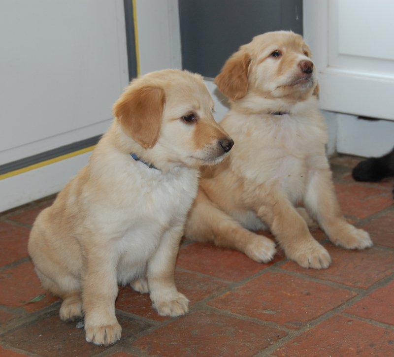 27-02-2013, avec (en avant plan) ma soeur Ivane dans la cuisine. Nous nous entendons très bien, nous sommes souvent assise l'une à côté de l'autre. C'est parce que nous sommes deux blondes ... pas bêtes du tout!
